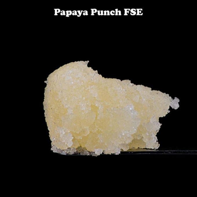 Papaya Punch #2 FSE by Kind Selections